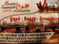 excursion quad buggy dromadaire marrakech palmeraie